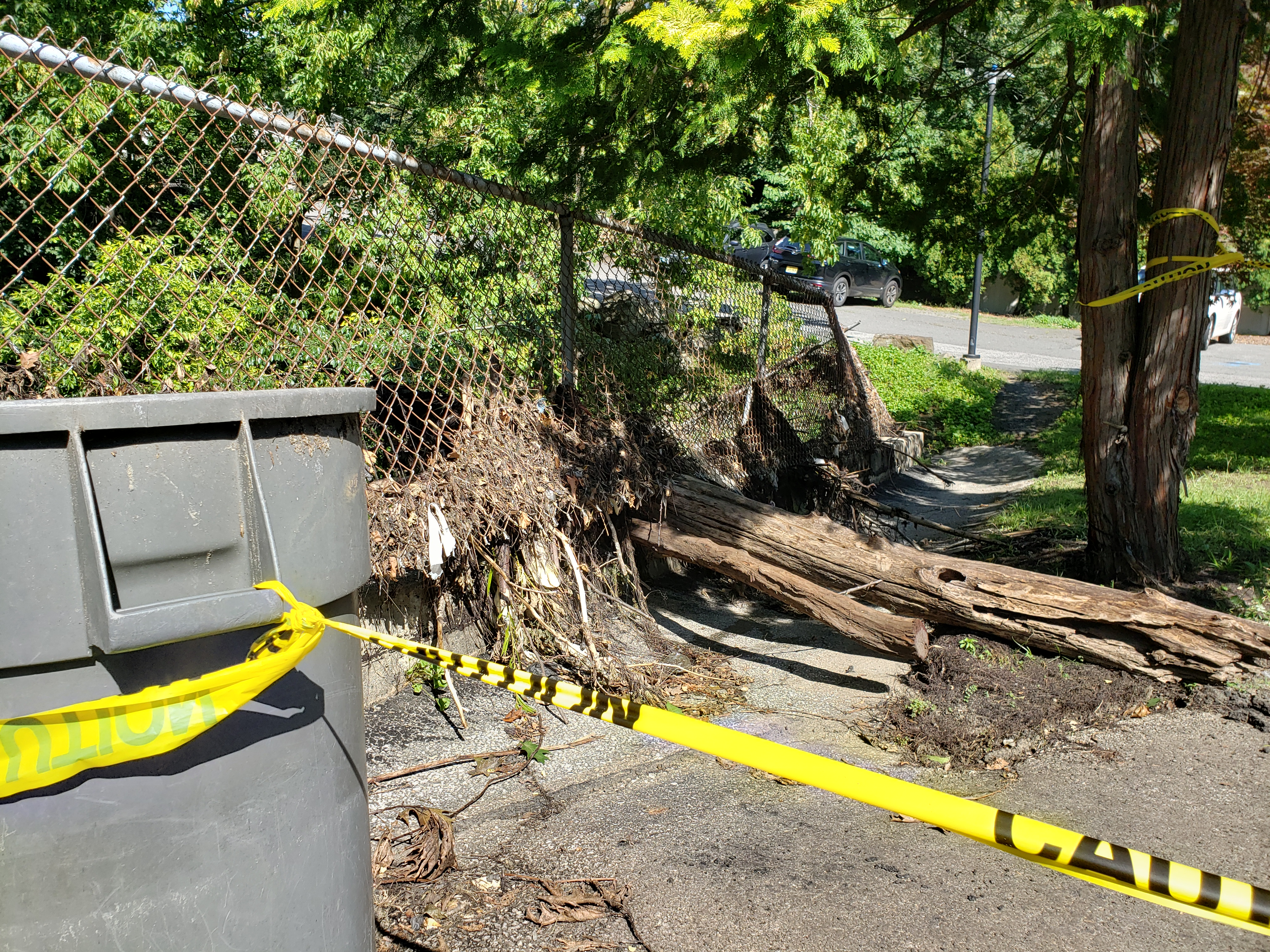 Tree crashes through fencing